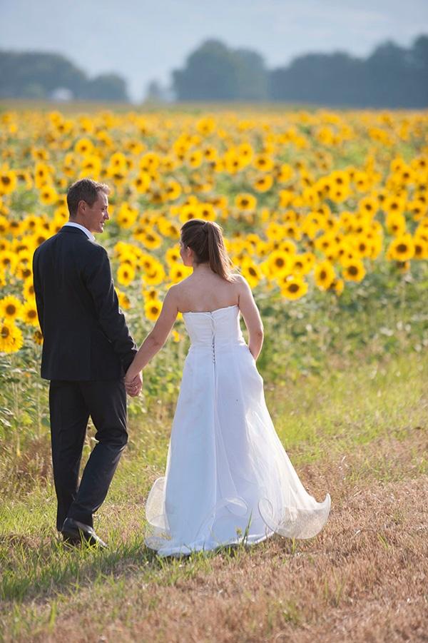 γαμος ηλιανθος