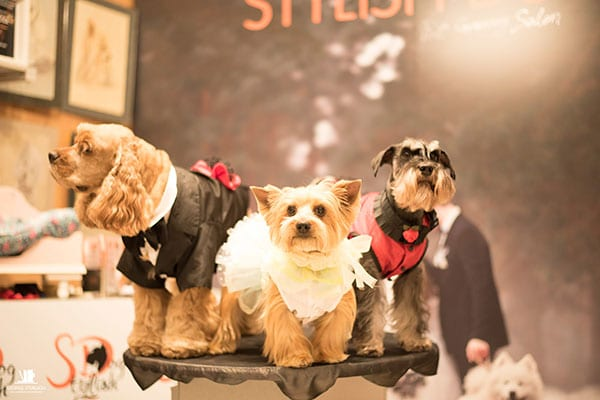 PET STYLING FOR WEDDINGS