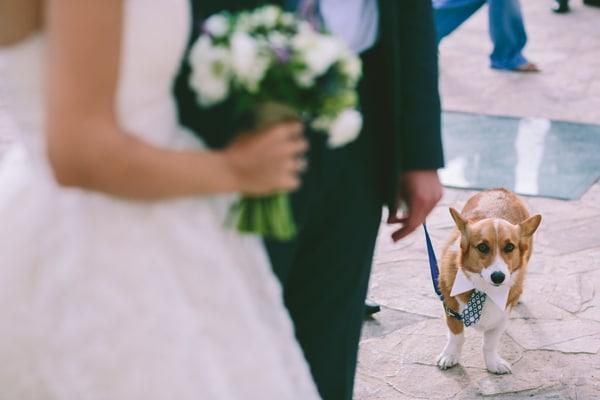 σκυλος-σε-γαμο