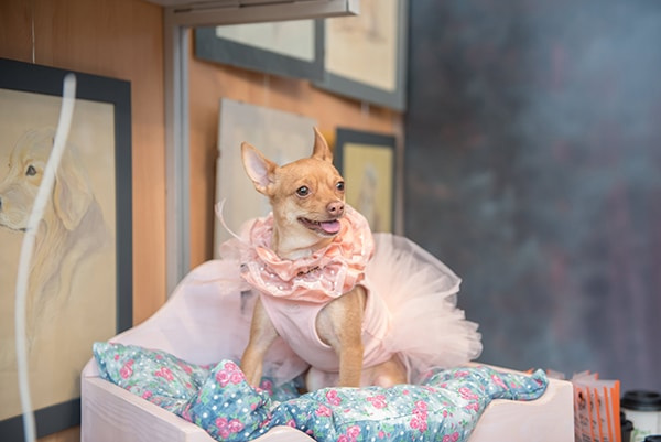 how-include-your-pet-wedding_02