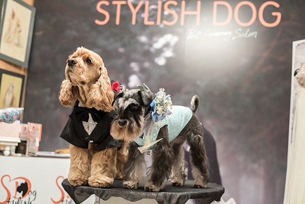 how-include-your-pet-wedding_03